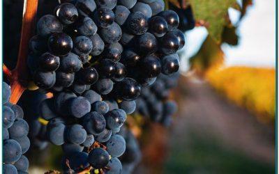 Vinos Valtravieso nos trasladan a un territorio singular de la Ribera del Duero: viñedos y bodega situados en uno de los páramos calizos más altos de esta región, a 915m de altitud